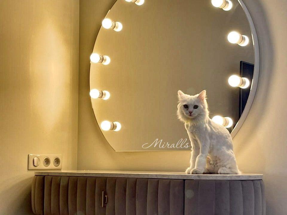 котик и гримерное зеркало Diva